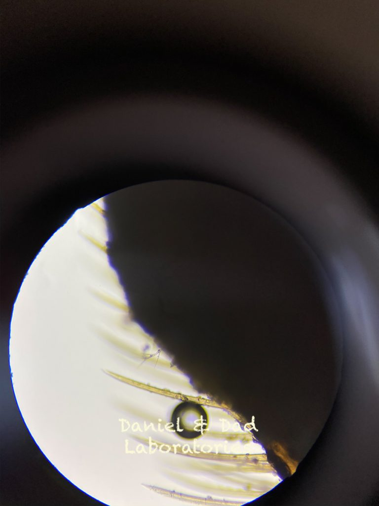 Bees in the microscope